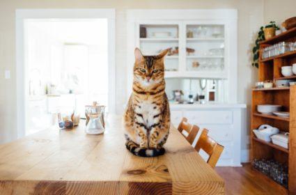 Сухой корм для кошек – как выбрать